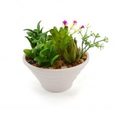 Ceramic pots with succulent plants